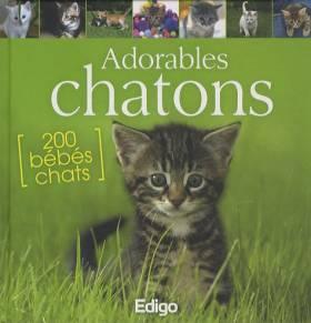 Yann Belloir - Adorables chatons